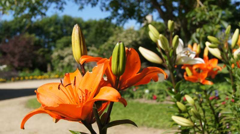 domaine fleur mariage dinard