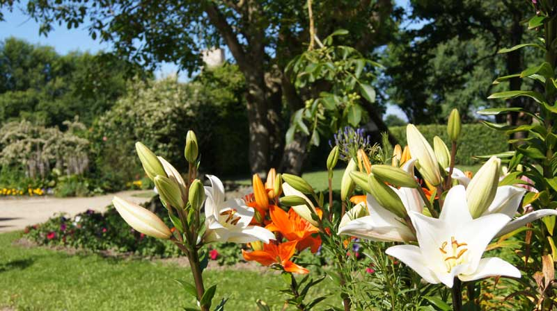 fleurs domaine mariage